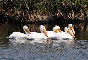 Flock of White Birds