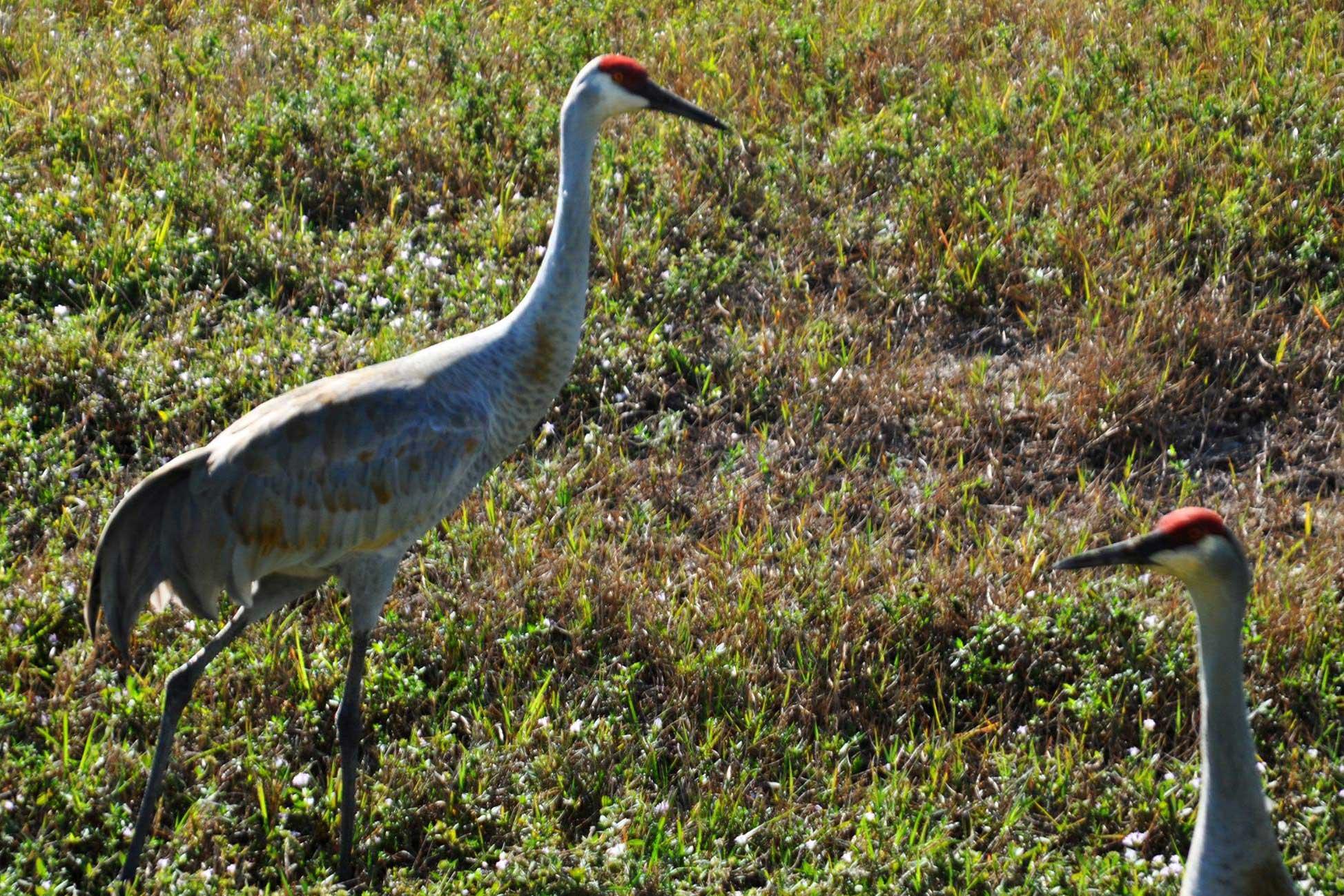 Cranes at the Dump