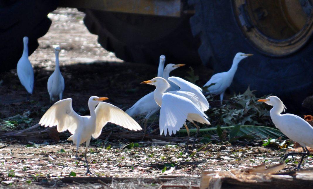 Birds at the Dump