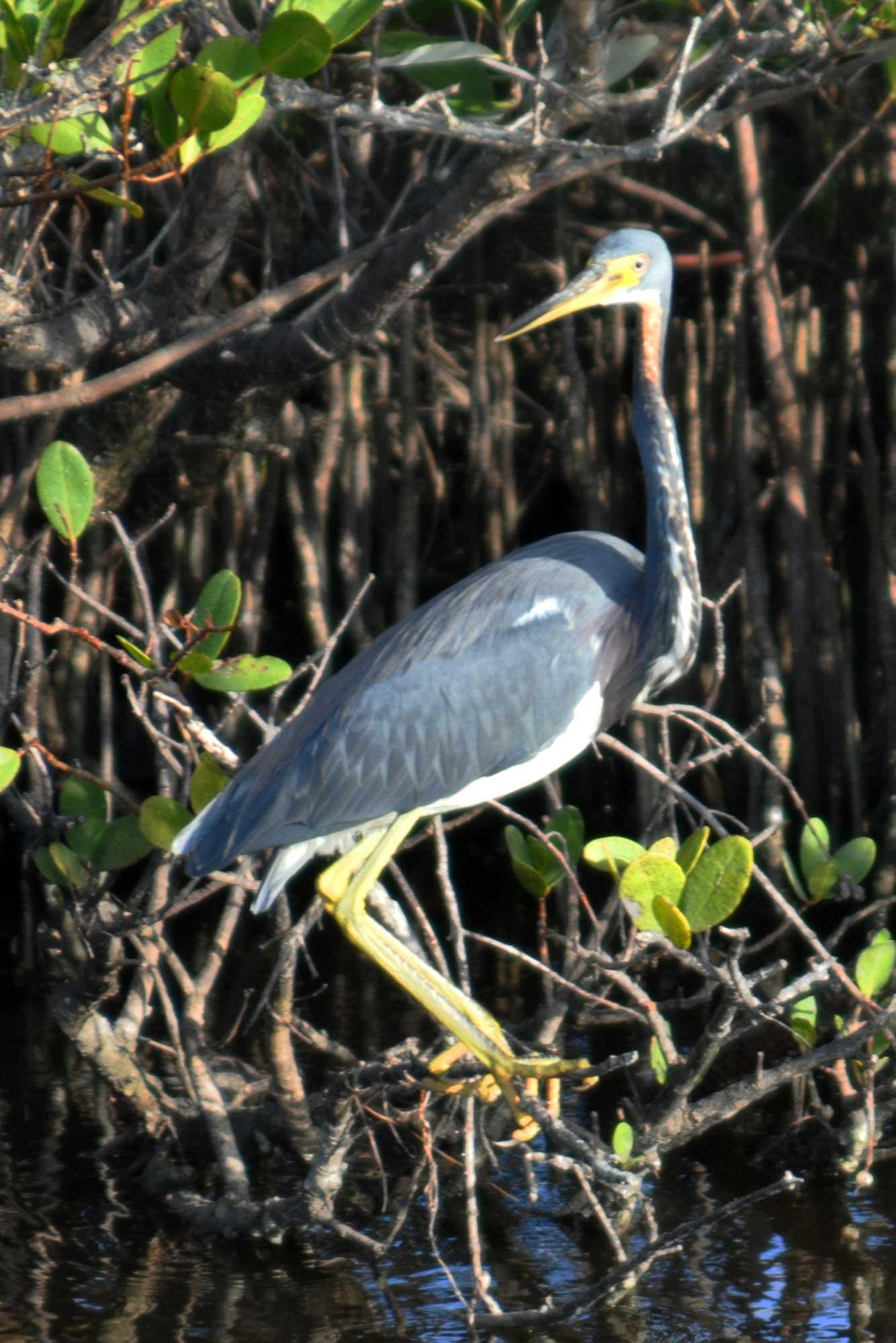 Wildlife Refuge Bird